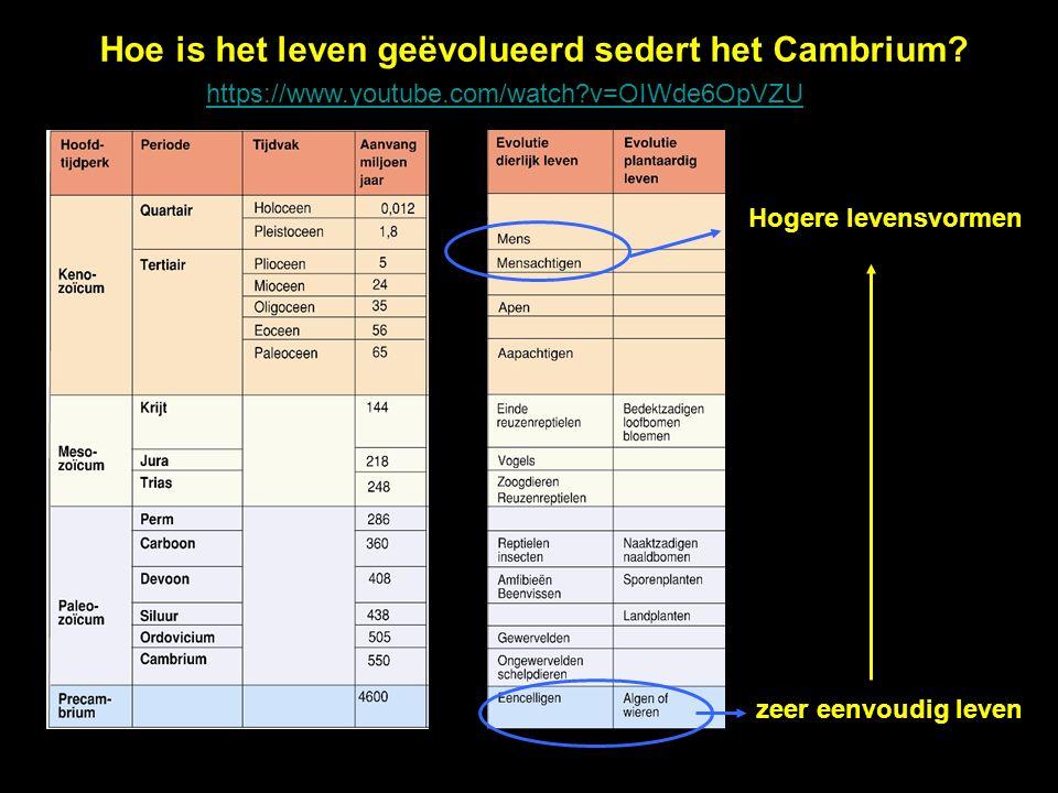 Hoe is het leven geëvolueerd sedert het Cambrium? zeer eenvoudig leven Hogere levensvormen https://www.youtube.com/watch?v=OIWde6OpVZU