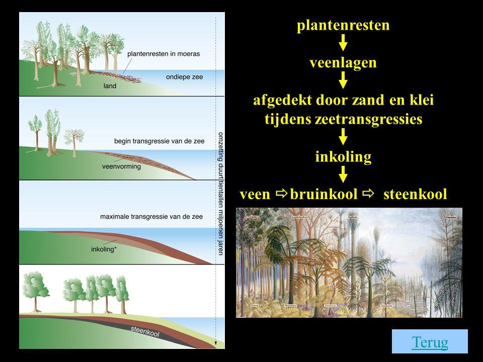 Terug plantenresten veenlagen afgedekt door zand en klei tijdens zeetransgressies inkoling veen  bruinkool  steenkool
