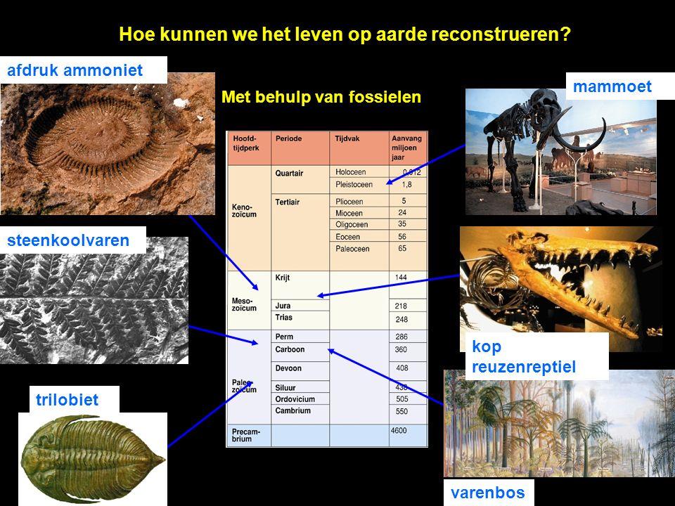 Hoe kunnen we het leven op aarde reconstrueren? Met behulp van fossielen trilobiet varenbos steenkoolvaren afdruk ammoniet kop reuzenreptiel mammoet