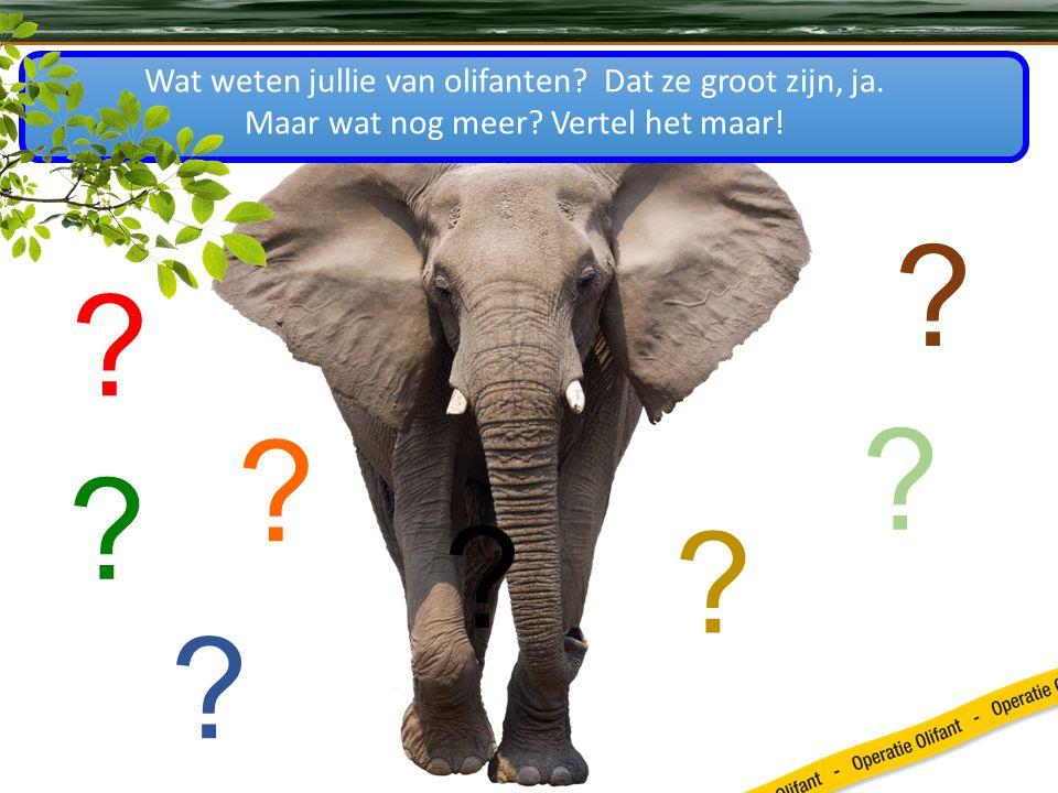 Wat weten jullie van olifanten. Dat ze groot zijn, ja.