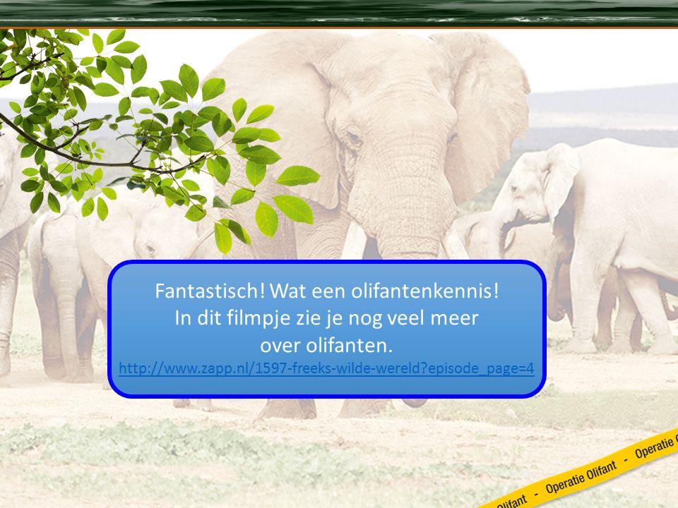 Fantastisch. Wat een olifantenkennis. In dit filmpje zie je nog veel meer over olifanten.