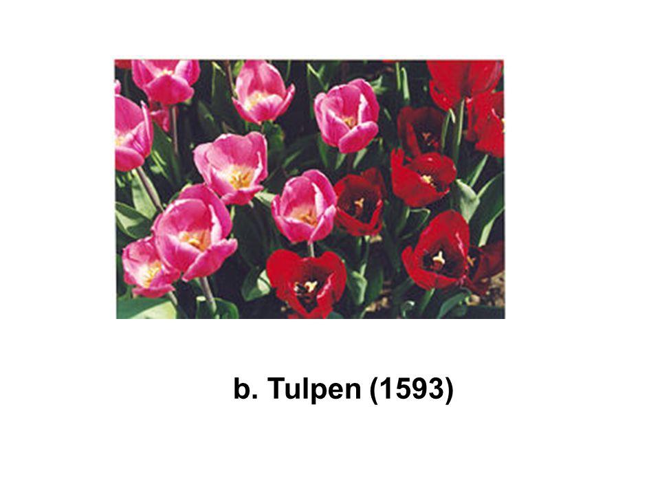 b. Tulpen (1593)