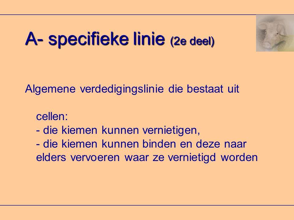 A- specifieke linie (2e deel) Algemene verdedigingslinie die bestaat uit cellen: - die kiemen kunnen vernietigen, - die kiemen kunnen binden en deze naar elders vervoeren waar ze vernietigd worden