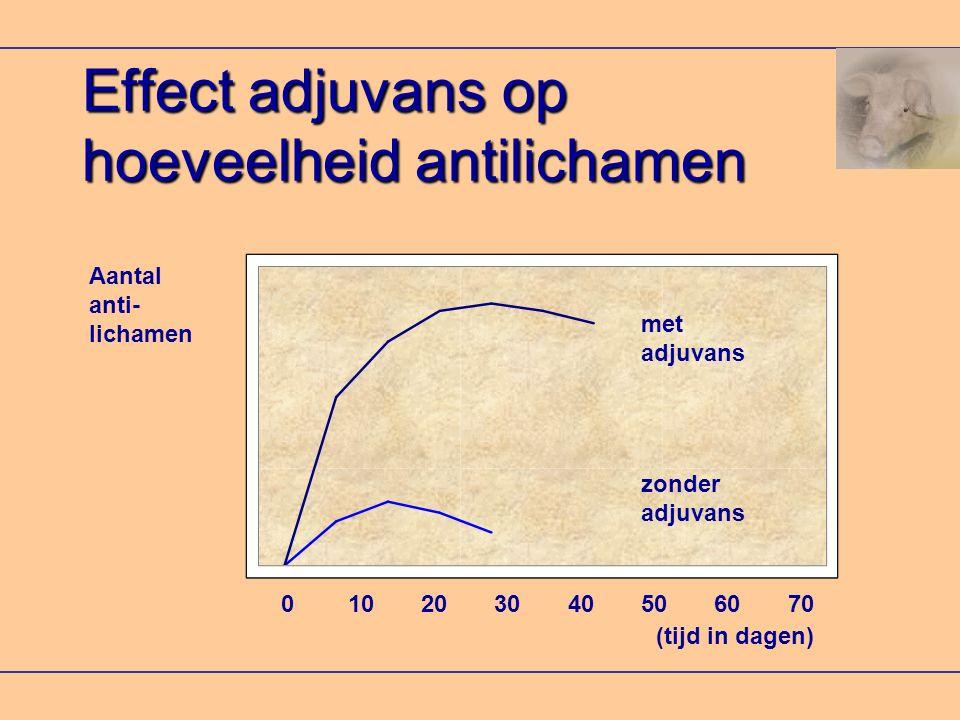 Effect adjuvans op hoeveelheid antilichamen met adjuvans zonder adjuvans Aantal anti- lichamen 0 10 20 30 40 50 60 70 (tijd in dagen)