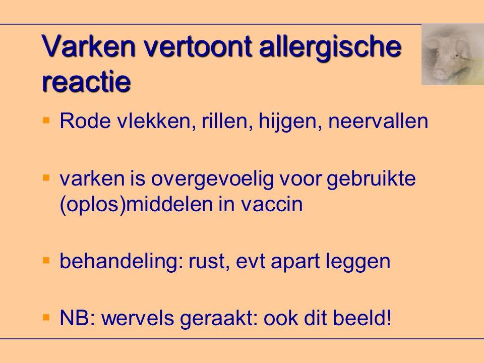 Varken vertoont allergische reactie  Rode vlekken, rillen, hijgen, neervallen  varken is overgevoelig voor gebruikte (oplos)middelen in vaccin  beh