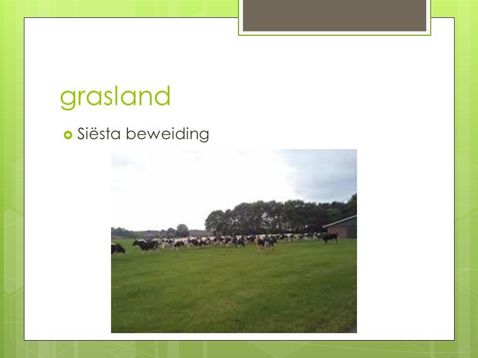 grasland  Siësta beweiding