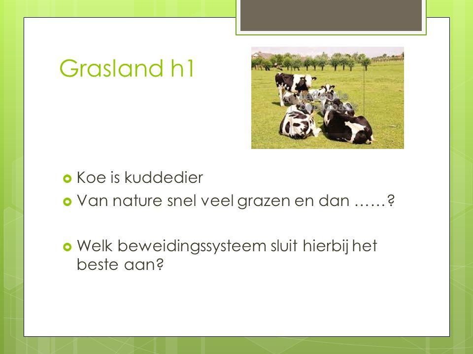 Grasland h1  Koe is kuddedier  Van nature snel veel grazen en dan ……?  Welk beweidingssysteem sluit hierbij het beste aan?