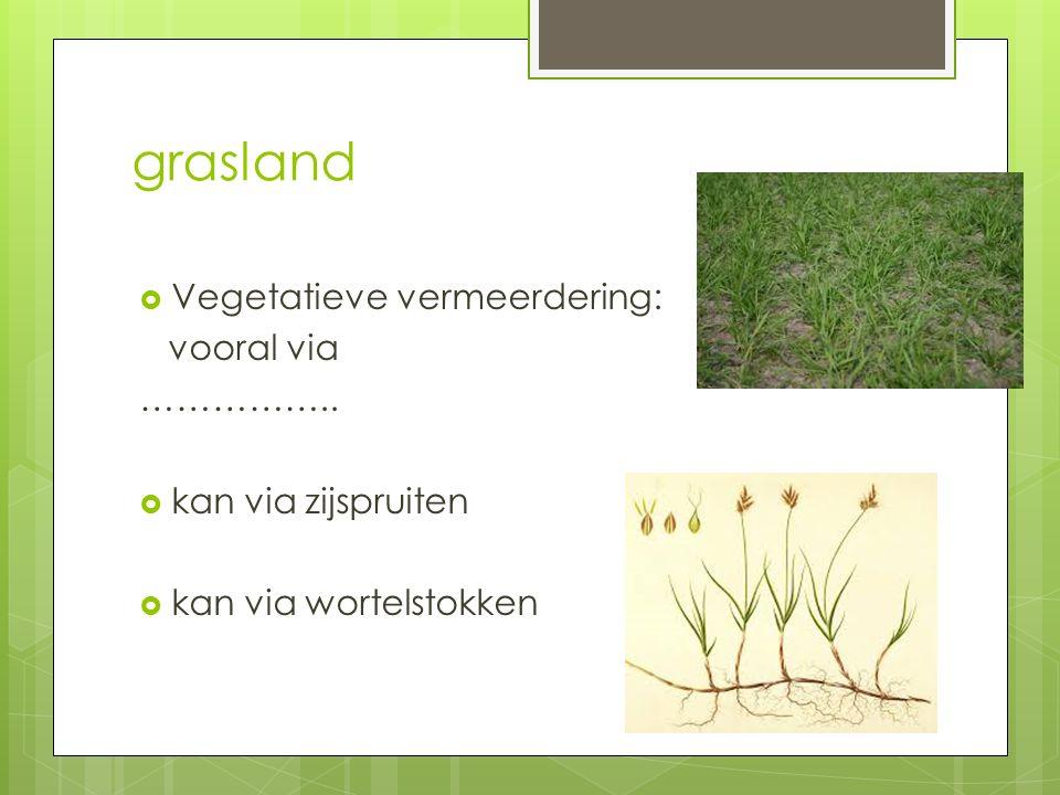 grasland  Vegetatieve vermeerdering: vooral via ……………..  kan via zijspruiten  kan via wortelstokken