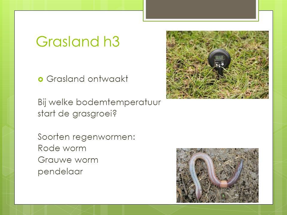 Grasland h3  Grasland ontwaakt Bij welke bodemtemperatuur start de grasgroei? Soorten regenwormen: Rode worm Grauwe worm pendelaar
