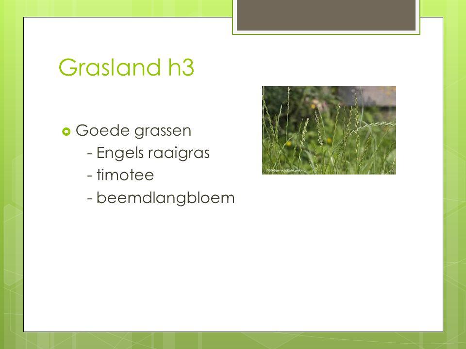 Grasland h3  Goede grassen - Engels raaigras - timotee - beemdlangbloem