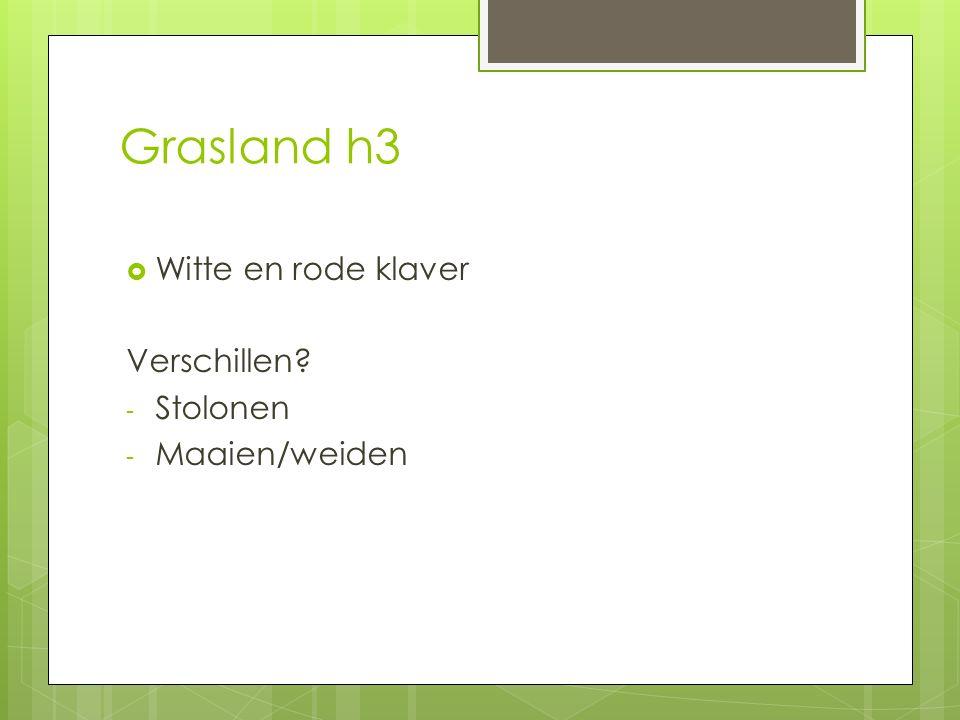 Grasland h3  Witte en rode klaver Verschillen? - Stolonen - Maaien/weiden