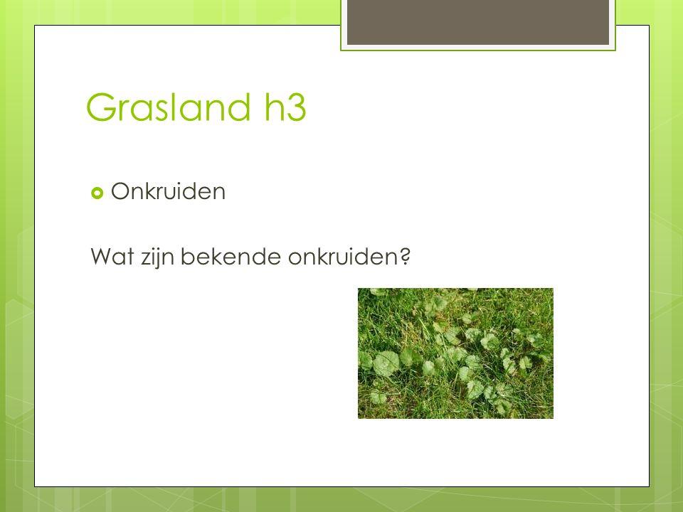 Grasland h3  Onkruiden Wat zijn bekende onkruiden?