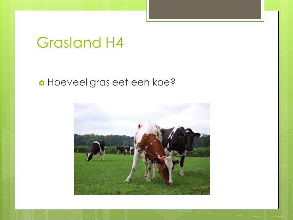 Grasland H4  Hoeveel gras eet een koe?