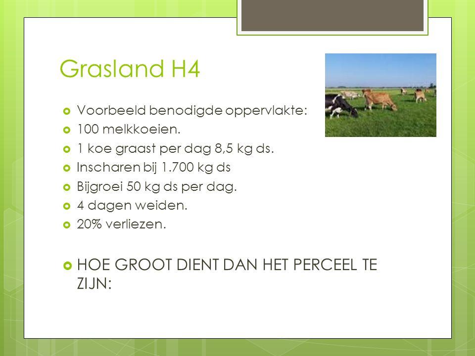 Grasland H4  Voorbeeld benodigde oppervlakte:  100 melkkoeien.  1 koe graast per dag 8,5 kg ds.  Inscharen bij 1.700 kg ds  Bijgroei 50 kg ds per