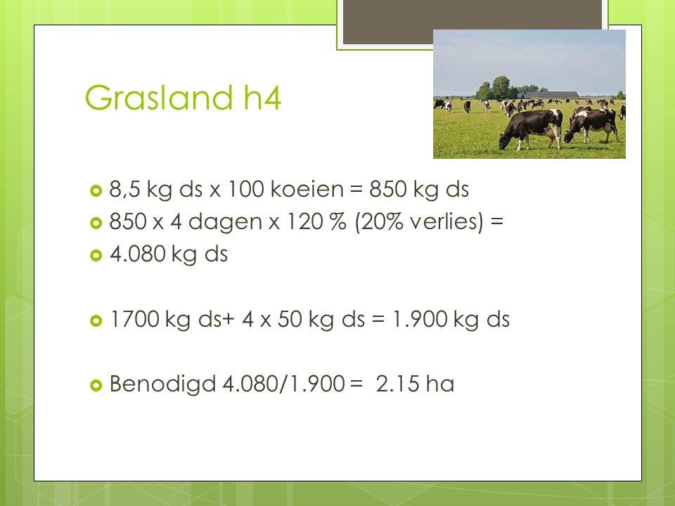 Grasland h4  8,5 kg ds x 100 koeien = 850 kg ds  850 x 4 dagen x 120 % (20% verlies) =  4.080 kg ds  1700 kg ds+ 4 x 50 kg ds = 1.900 kg ds  Beno