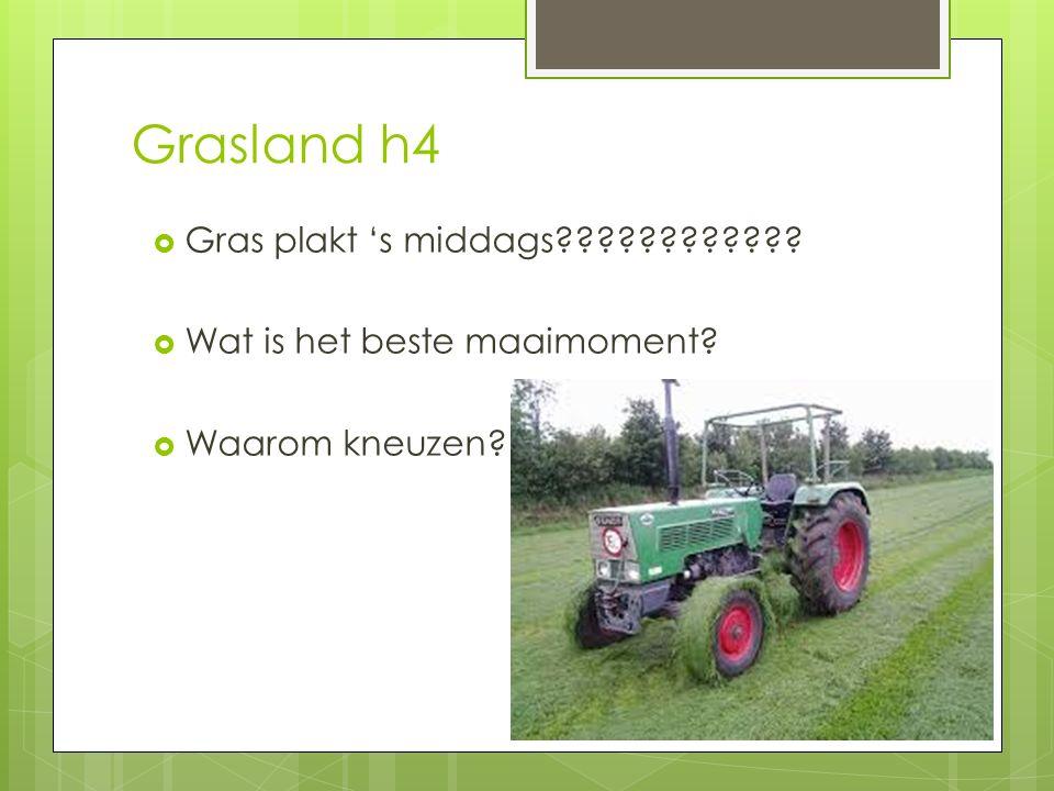 Grasland h4  Gras plakt 's middags????????????  Wat is het beste maaimoment?  Waarom kneuzen?