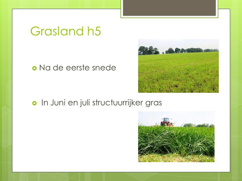 Grasland h5  Na de eerste snede  In Juni en juli structuurrijker gras