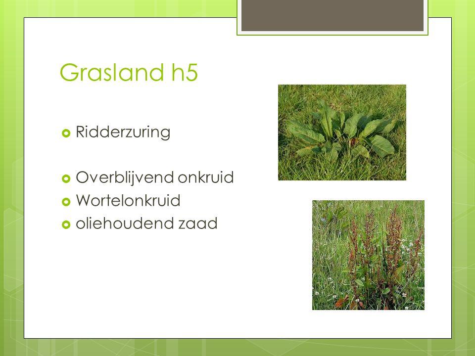 Grasland h5  Ridderzuring  Overblijvend onkruid  Wortelonkruid  oliehoudend zaad
