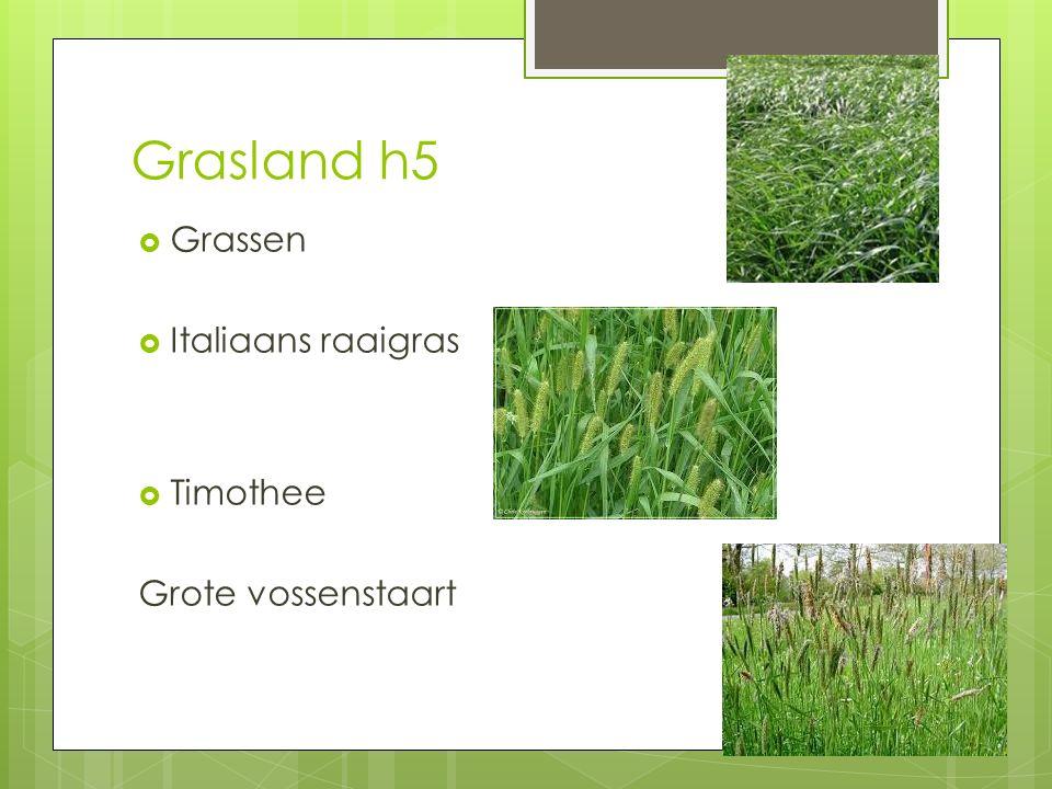 Grasland h5  Grassen  Italiaans raaigras  Timothee Grote vossenstaart