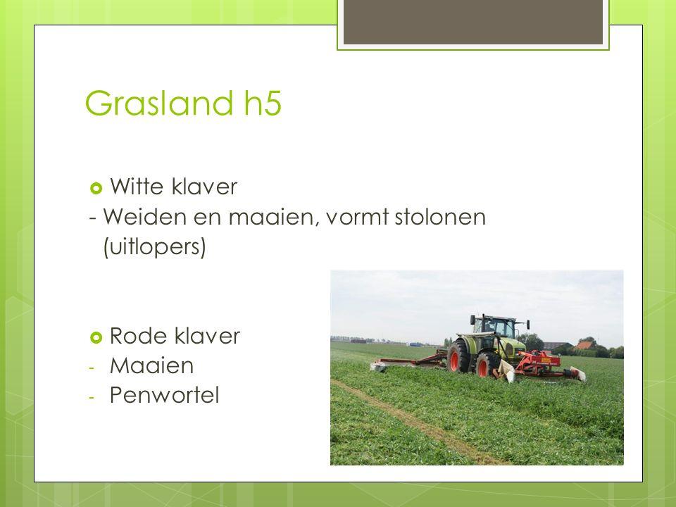 Grasland h5  Witte klaver - Weiden en maaien, vormt stolonen (uitlopers)  Rode klaver - Maaien - Penwortel