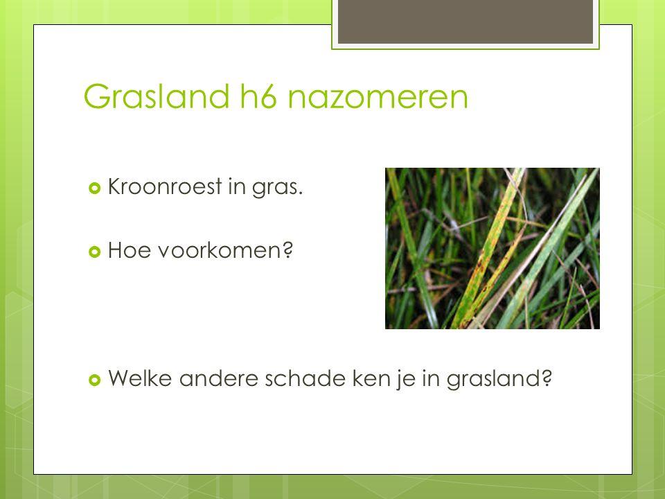 Grasland h6 nazomeren  Kroonroest in gras.  Hoe voorkomen?  Welke andere schade ken je in grasland?