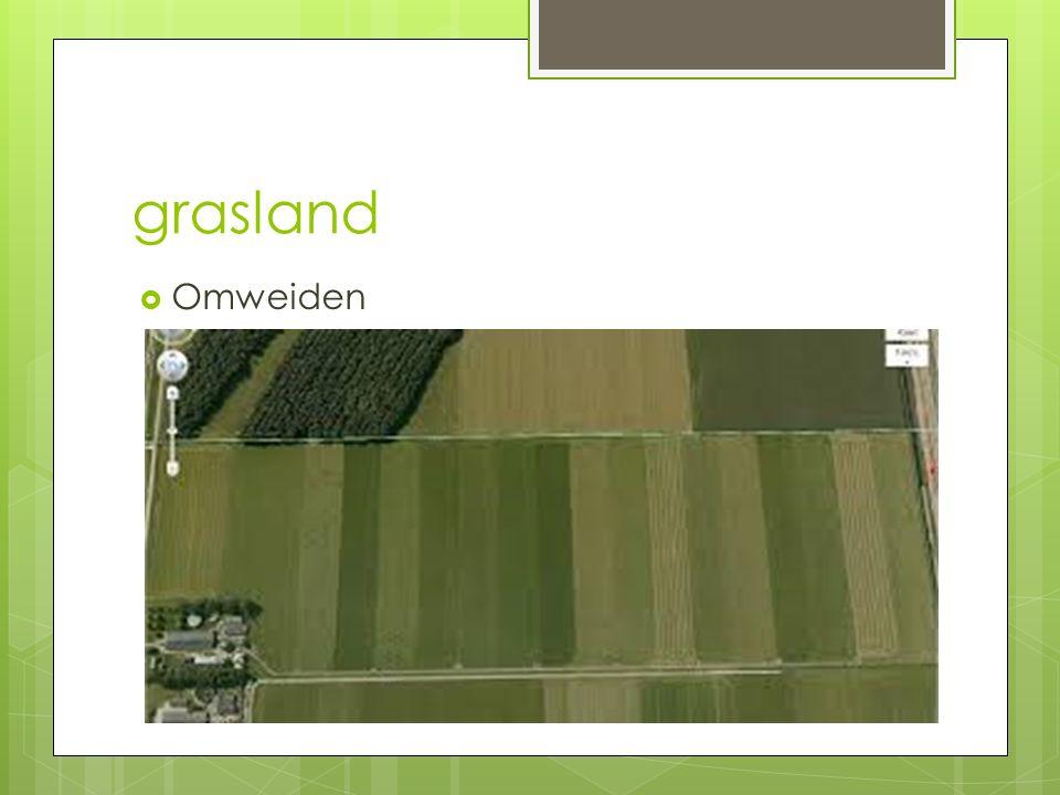 Grasland h3  Matige grassen - ruwbeemdgras - veldbeemdgras - kweekgras - gestreepte witbol -> - fioringras - kropaar