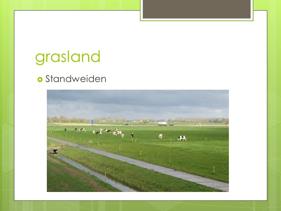Grasland h3  Slechte grassen - straatgras - geknikte vossenstaart - liesgras - roodzwenkgras - mannagras