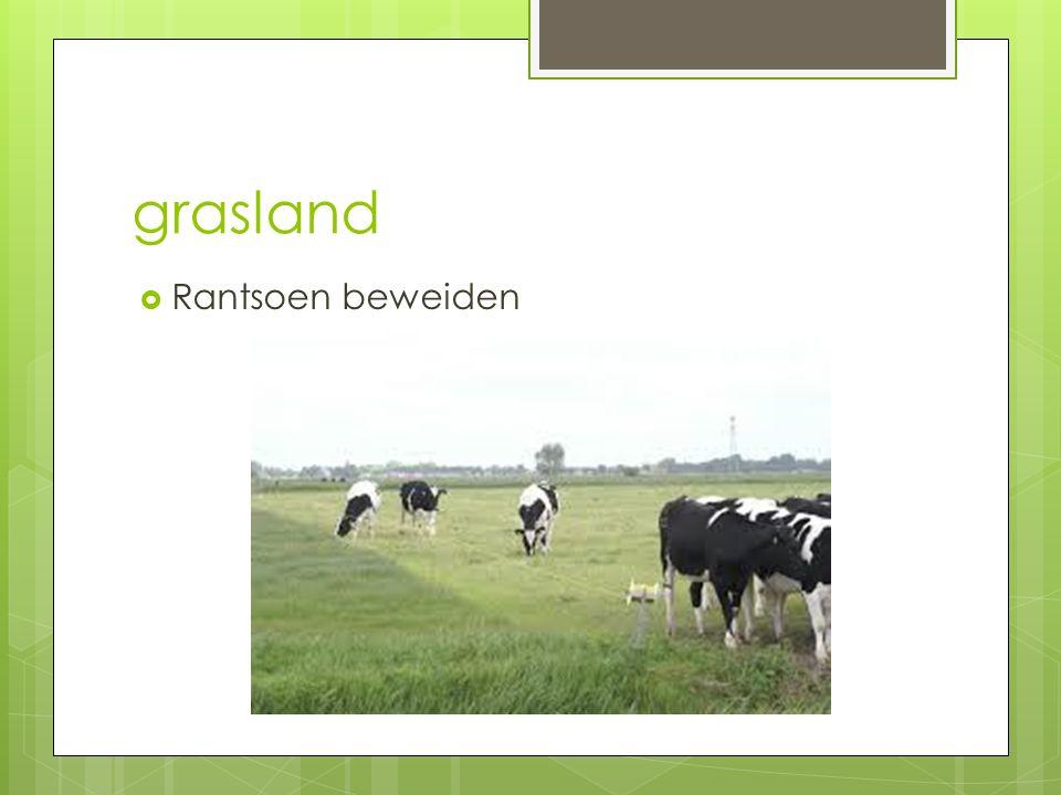 Grasland h6 nazomeren  Kroonroest in gras. Hoe voorkomen.