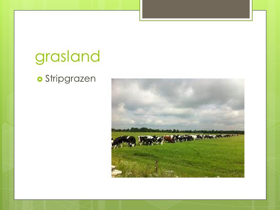 Grasland H4  Beweidingssystemen