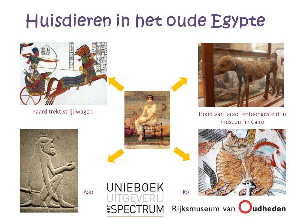 Huisdieren in het oude Egypte Paard trekt strijdwagen Hond van farao tentoongesteld in museum in Caïro KatAap