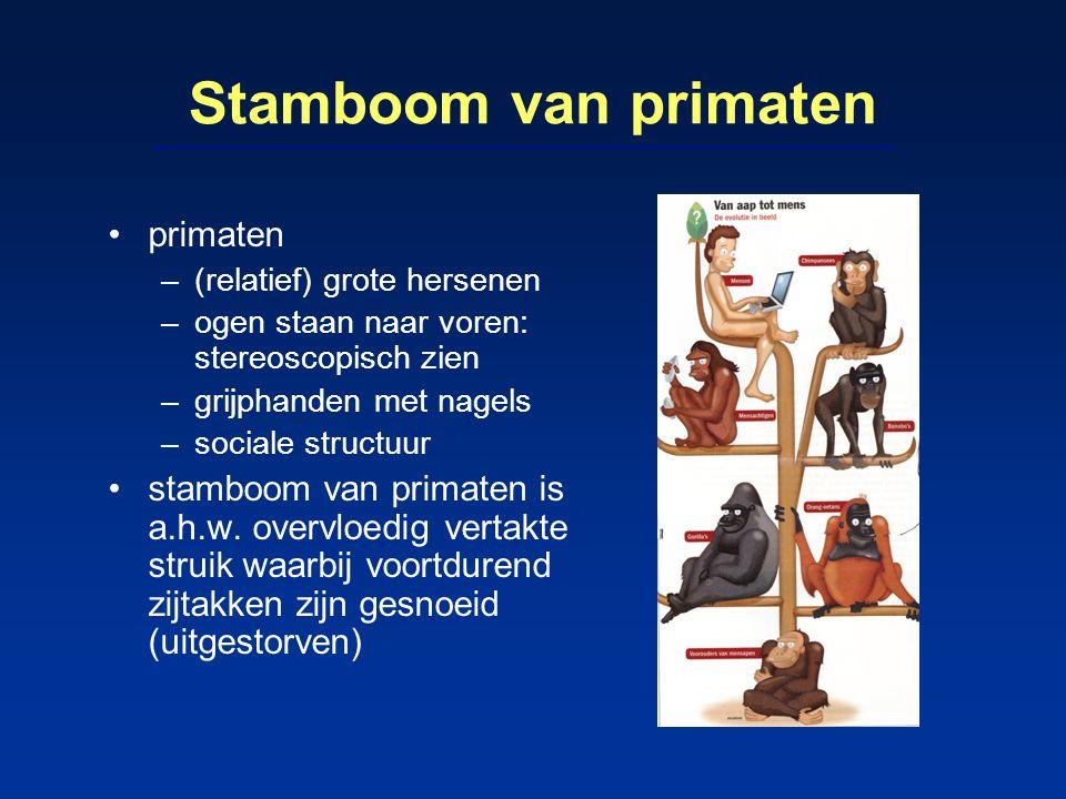 Stamboom van primaten primaten –(relatief) grote hersenen –ogen staan naar voren: stereoscopisch zien –grijphanden met nagels –sociale structuur stamb