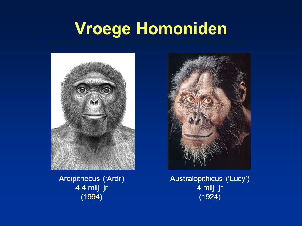 Vroege Homoniden Ardipithecus ('Ardi') 4,4 milj. jr (1994) Australopithicus ('Lucy') 4 milj. jr (1924)