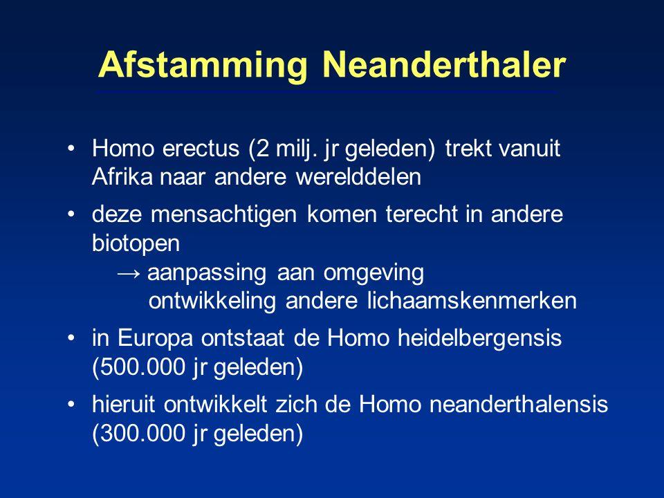 Afstamming Neanderthaler Homo erectus (2 milj. jr geleden) trekt vanuit Afrika naar andere werelddelen deze mensachtigen komen terecht in andere bioto