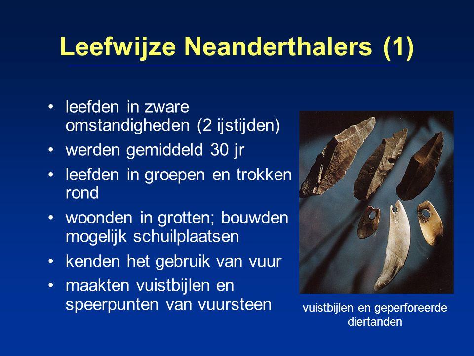 Leefwijze Neanderthalers (1) leefden in zware omstandigheden (2 ijstijden) werden gemiddeld 30 jr leefden in groepen en trokken rond woonden in grotte
