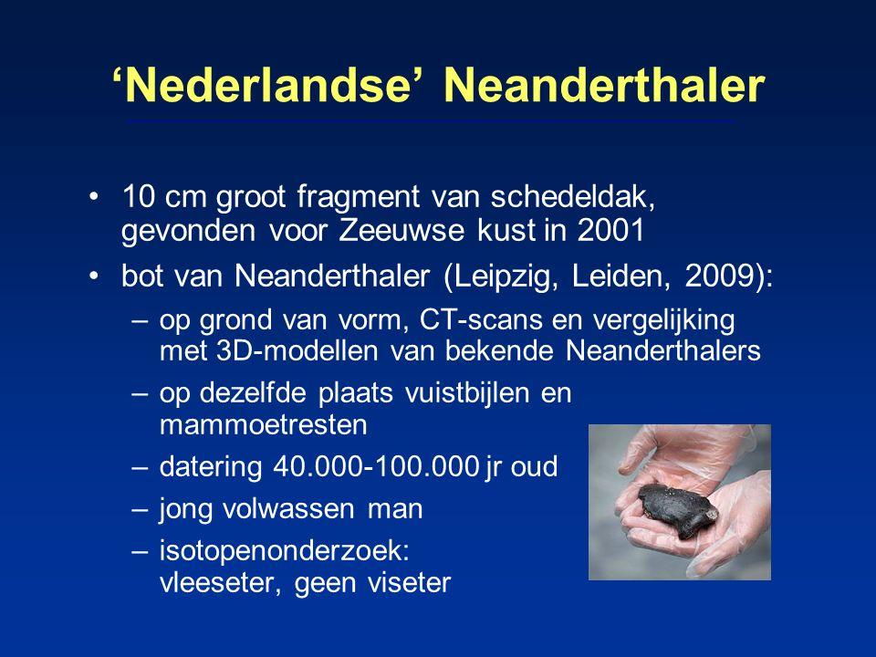 'Nederlandse' Neanderthaler 10 cm groot fragment van schedeldak, gevonden voor Zeeuwse kust in 2001 bot van Neanderthaler (Leipzig, Leiden, 2009): –op