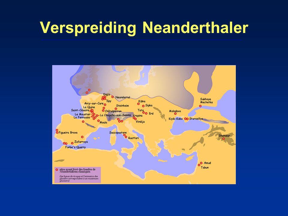 'Nederlandse' Neanderthaler 10 cm groot fragment van schedeldak, gevonden voor Zeeuwse kust in 2001 bot van Neanderthaler (Leipzig, Leiden, 2009): –op grond van vorm, CT-scans en vergelijking met 3D-modellen van bekende Neanderthalers –op dezelfde plaats vuistbijlen en mammoetresten –datering 40.000-100.000 jr oud –jong volwassen man –isotopenonderzoek: vleeseter, geen viseter