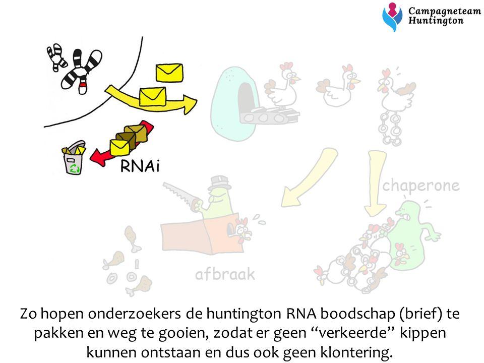 """Zo hopen onderzoekers de huntington RNA boodschap (brief) te pakken en weg te gooien, zodat er geen """"verkeerde"""" kippen kunnen ontstaan en dus ook geen"""