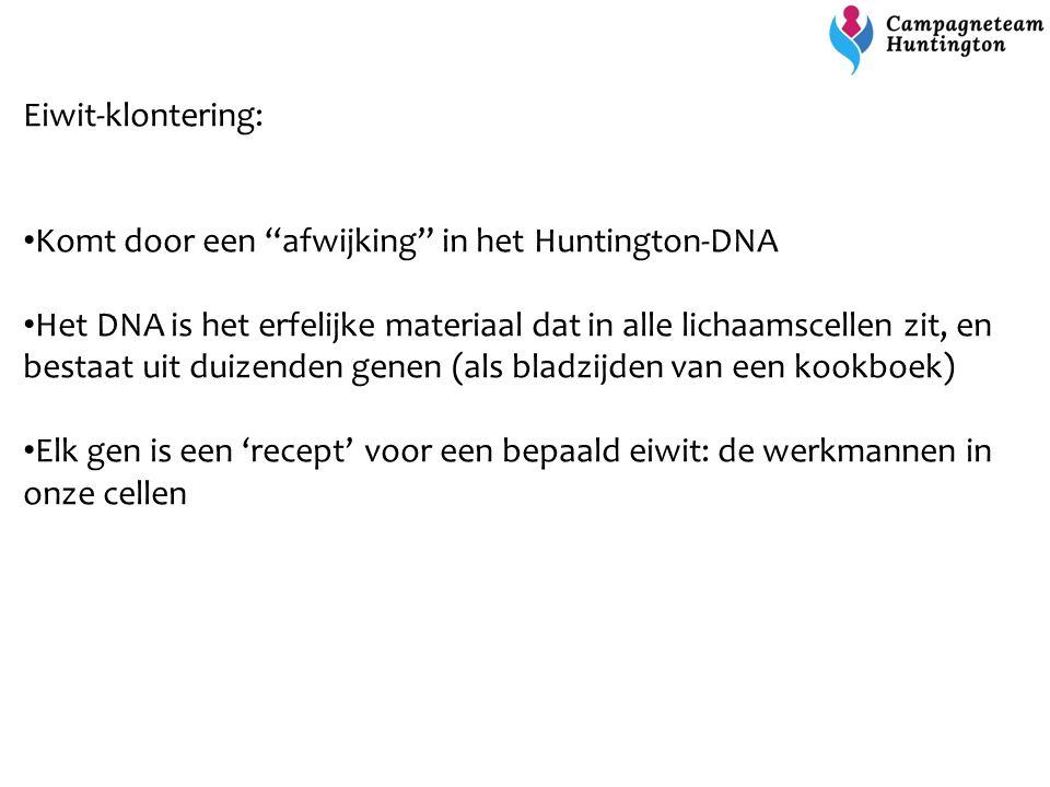 """Eiwit-klontering: Komt door een """"afwijking"""" in het Huntington-DNA Het DNA is het erfelijke materiaal dat in alle lichaamscellen zit, en bestaat uit du"""