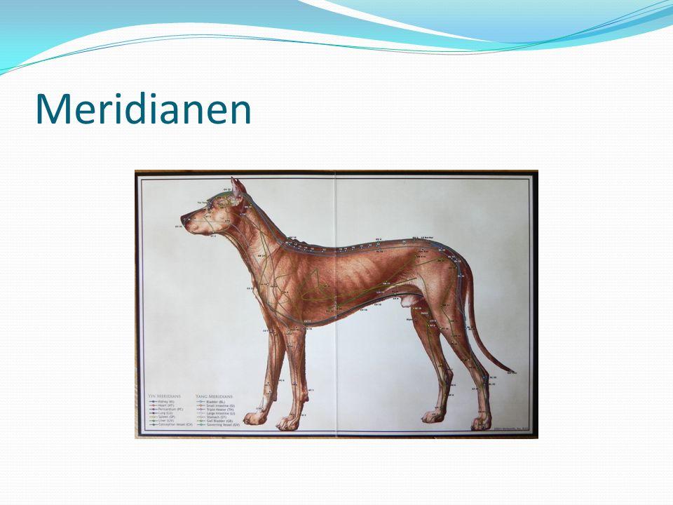 Meridianen