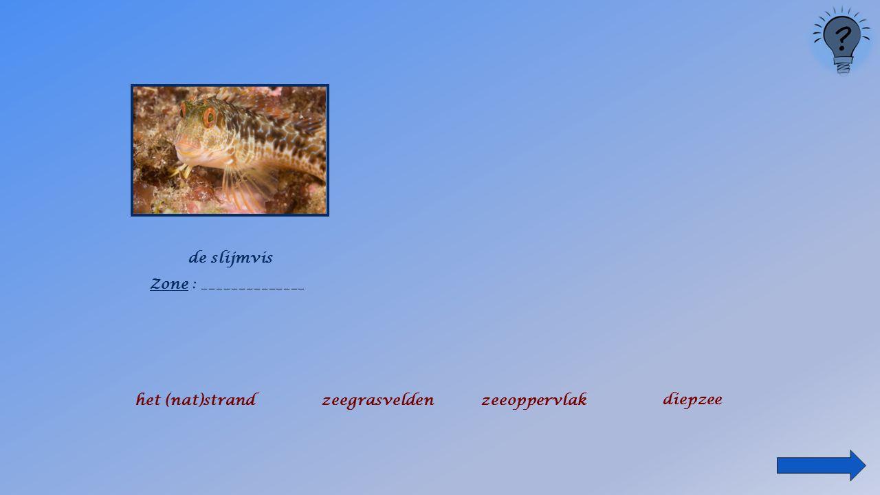 de jonkervis Zone : ________________ het (nat)strandzeegrasveldenzeeoppervlak diepzee