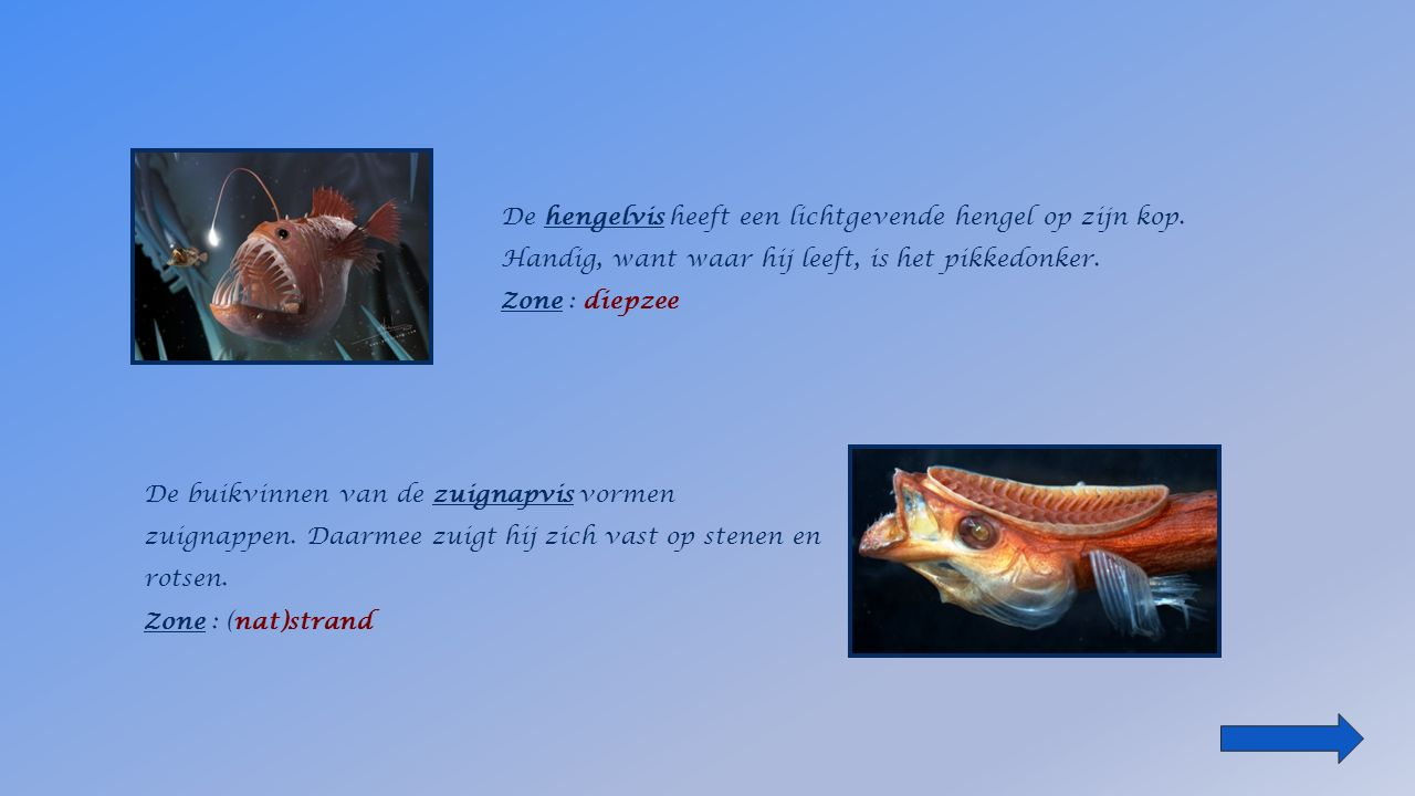 de hengelvis Zone : __________ het (nat)strandzeegrasveldenzeeoppervlak diepzee