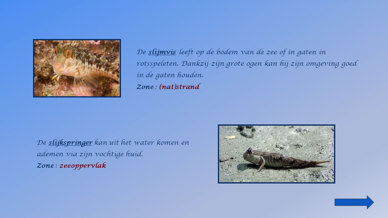 de hengelvis Zone : diepzee de zuignapvis Zone : ______________ het (nat)strandzeegrasveldenzeeoppervlak diepzee