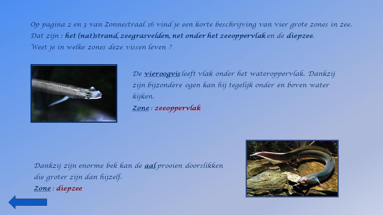 De jonkervis : deze vis voedt zich met heel kleine diertjes die hij vindt op de bodem van de zee. Zone : zeegrasvelden De gestreepte bokvis voedt zich