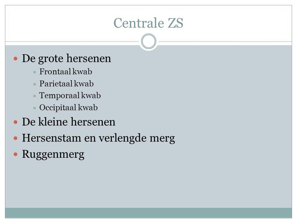 Centrale ZS De grote hersenen  Frontaal kwab  Parietaal kwab  Temporaal kwab  Occipitaal kwab De kleine hersenen Hersenstam en verlengde merg Rugg