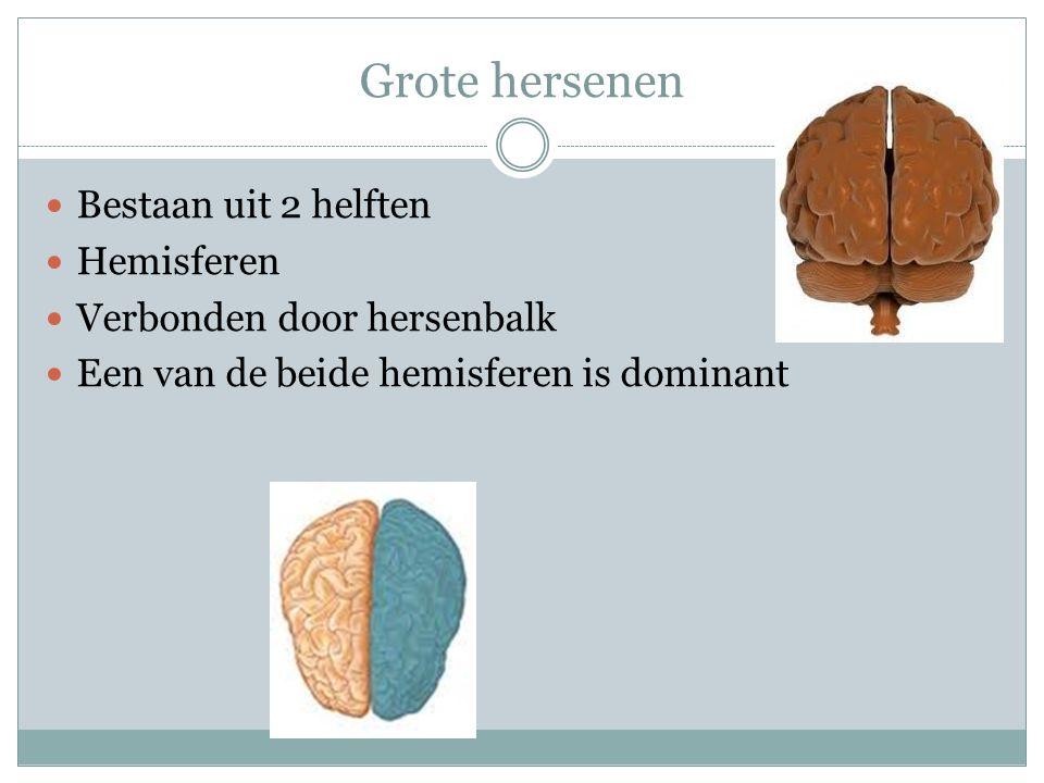 Grote hersenen Bestaan uit 2 helften Hemisferen Verbonden door hersenbalk Een van de beide hemisferen is dominant