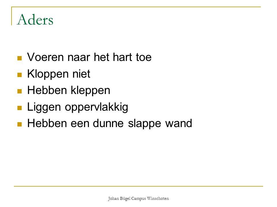Johan Bügel Campus Winschoten Aders Voeren naar het hart toe Kloppen niet Hebben kleppen Liggen oppervlakkig Hebben een dunne slappe wand