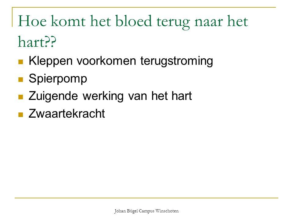 Johan Bügel Campus Winschoten Hoe komt het bloed terug naar het hart?? Kleppen voorkomen terugstroming Spierpomp Zuigende werking van het hart Zwaarte