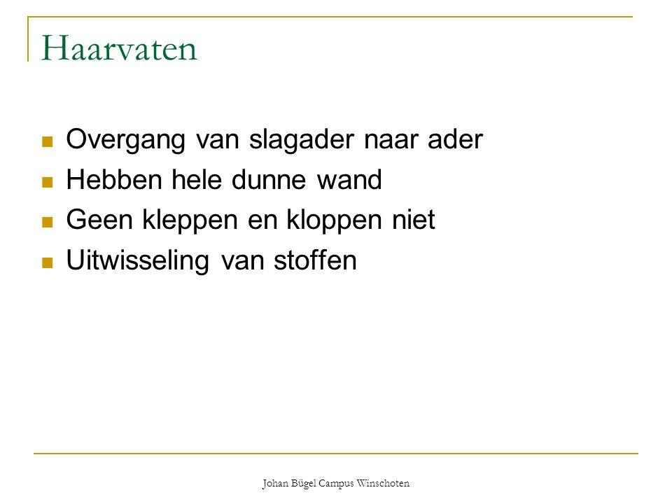 Johan Bügel Campus Winschoten Haarvaten Overgang van slagader naar ader Hebben hele dunne wand Geen kleppen en kloppen niet Uitwisseling van stoffen