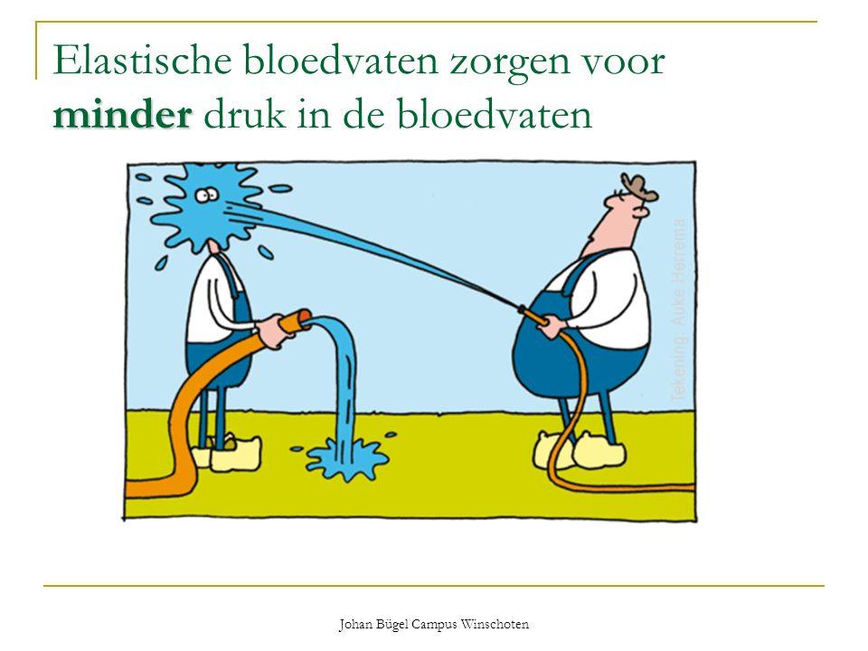 Johan Bügel Campus Winschoten minder Elastische bloedvaten zorgen voor minder druk in de bloedvaten