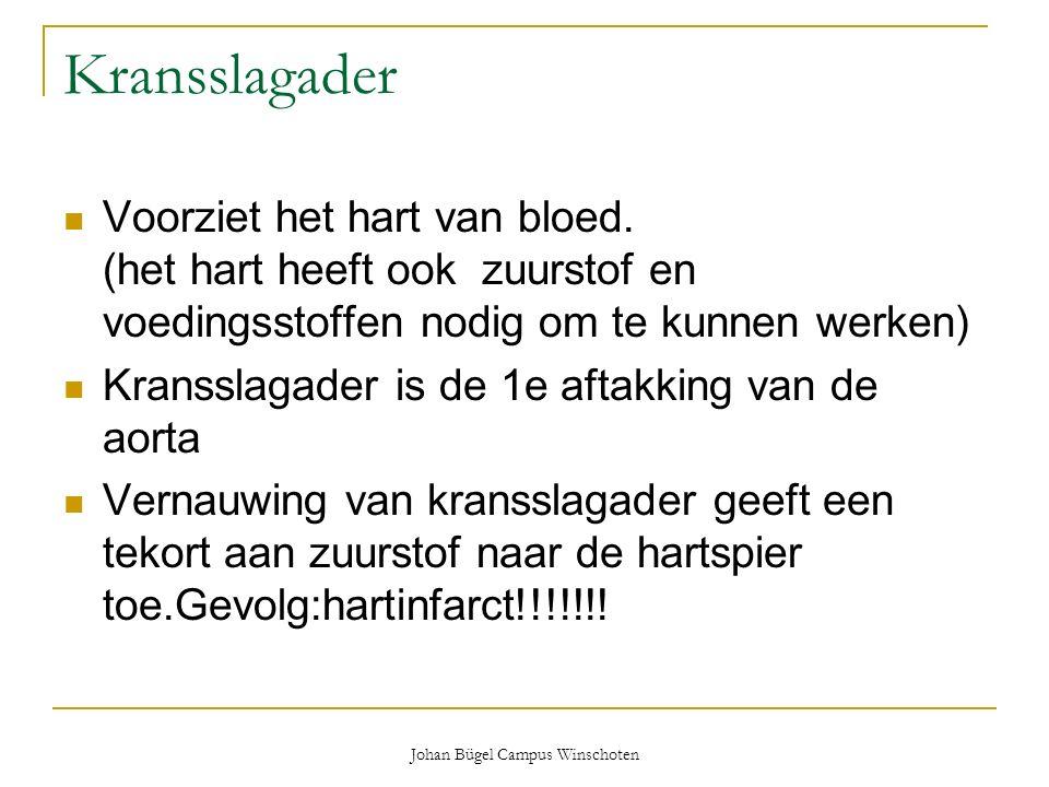Johan Bügel Campus Winschoten Kransslagader Voorziet het hart van bloed. (het hart heeft ook zuurstof en voedingsstoffen nodig om te kunnen werken) Kr